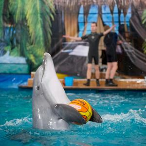 Дельфинарии, океанариумы Зернограда