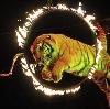 Цирки в Зернограде