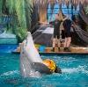 Дельфинарии, океанариумы в Зернограде
